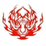 Naklejka welurowa dekoracyjna Ognisty tygrys W13