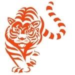 Naklejka welurowa ścienna Tygrys W14