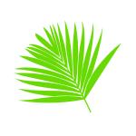 Welurowe naklejki Liście palmy W8