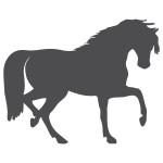 Naklejka welurowa Koń W10
