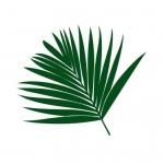 Naklejka na ścianę Liść palmy M41