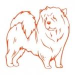 Naklejka dekoracyjna Pies chow chow M29