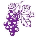 Naklejka na kafelki Kiść winogrona K1